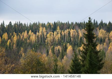 View of the beautiful autumn Karelian forest