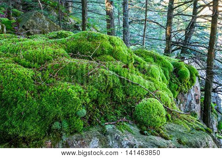 Beautiful scene of moss covering rocks at the Eau Claire Dells in Wisconsin.