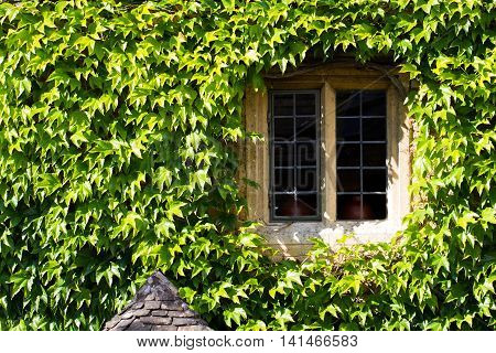 A window in a stone house surrounded by the leaves of the climbing plant Ivy, which also covers the walls.