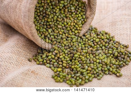Close up of green mung bean in sack bag and flow down to the ground.