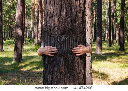 Girl Hugging A Tree In The Forest
