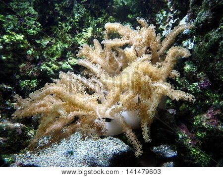 coral ,coral background , life in the ocean