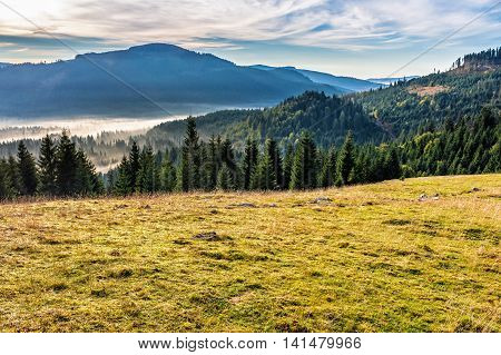 Spruce Forest In Foggy Romanian Mountains