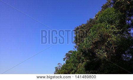 Céu azul, parque florestal junto a mãe natureza.