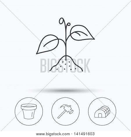 Sprout plant, hammer and pot icons. Hothouse linear sign. Linear icons in circle buttons. Flat web symbols. Vector