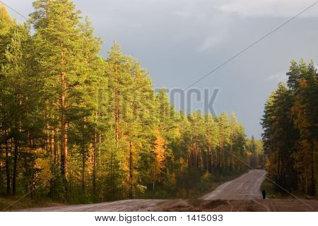The Lonely Traveller On Autumn Road