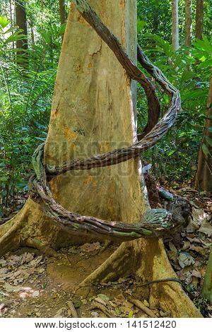 Big Banyan Tree Roots