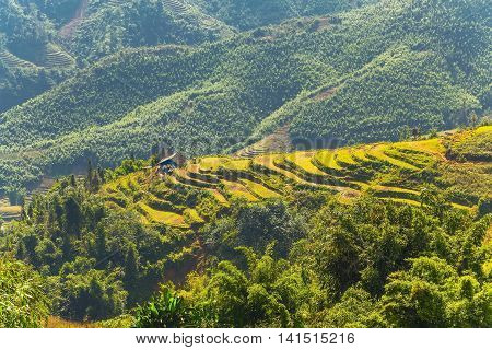 Agriculture Rice Fields On Terraced Vietnam