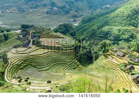 Village Agriculture Farm Terraced Rice Field Hill