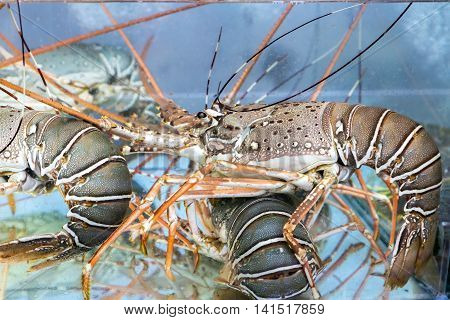 Lobster Under Water