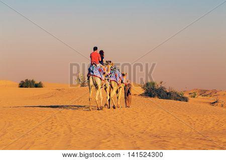 Camel Safari On Sand Dunes