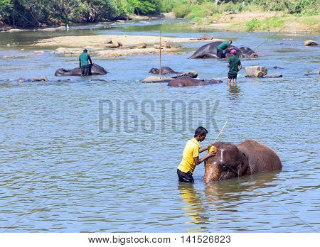 Elepants Bathing In River Sri Lanka, Ceylon
