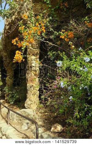 Flowerses In The Park Guell
