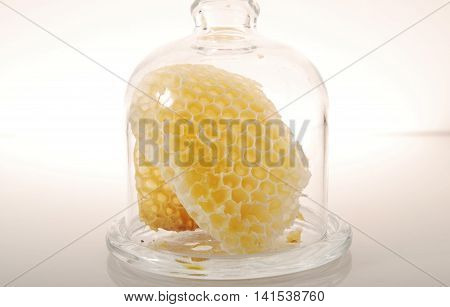 Empty cells in a glass case,  on a light background