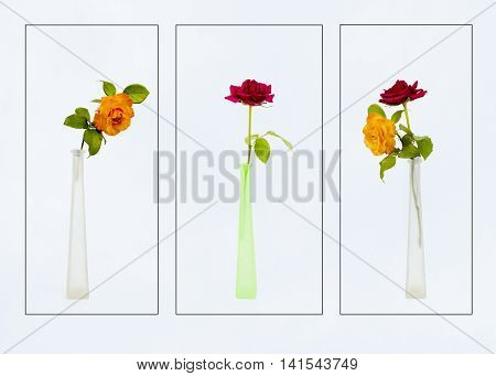 Three images of roses in glass vases on a plain background,