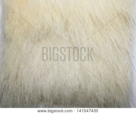 The fur of a polar bear, and north, oshkuy, Nanook, Umka (Ursus maritimus - «sea bear