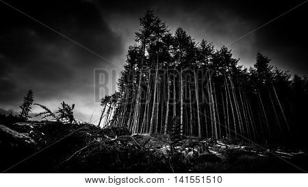 Black And Image Of A Scary Looking Forest At Dusk