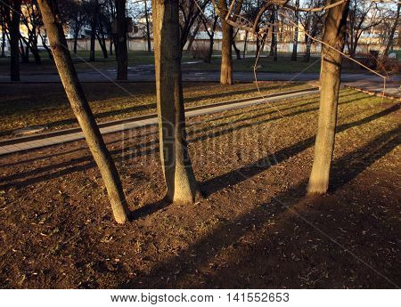 Young Trees And Their Shadows In Park.