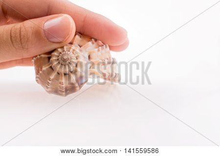 Hand holding Beautiful sea shell on a white background