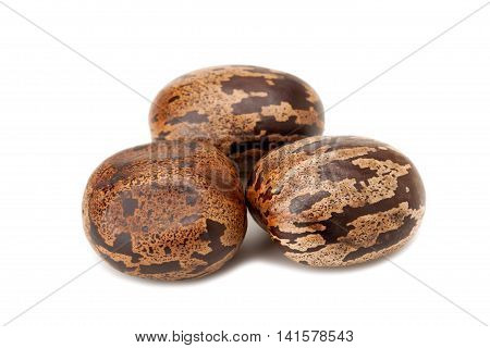 Brown Rubber Seed