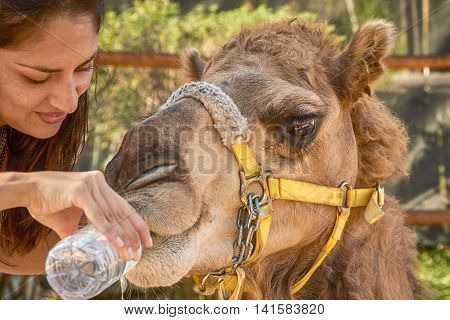 Young Woman Giving Water to Camel in Cozumel Mexico