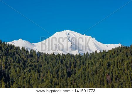 View of snowcapped Mount Shasta peaks with Alpine Forest on mountain