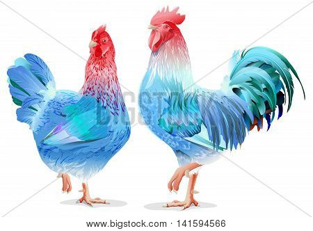 Blue Rooster and chicken female symbol 2017 by Chinese calendar. Isolated on white vector illustration