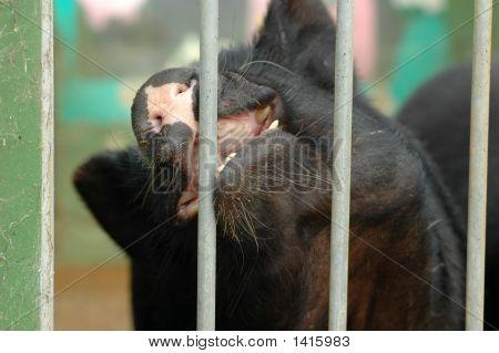 Cruelty To Animals