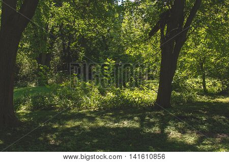 differing shades of light and green in a shadowy part of the woods
