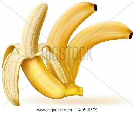 Whole and peeled bananas on white. Vector illustration