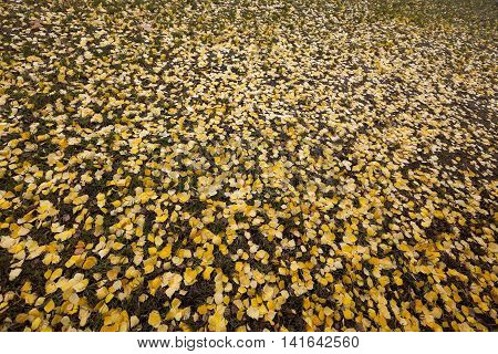 photographed close-up of old autumn leaves lying on the ground, fallen leaves, small depth of field