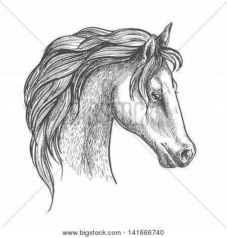 Arabian horse sketch with arched neck and curly long mane. Equestrian sporting symbol or horse racing theme design