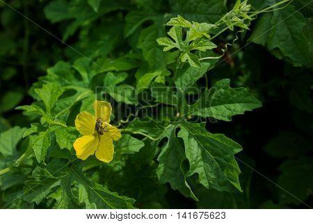 Some Kind Of Flora