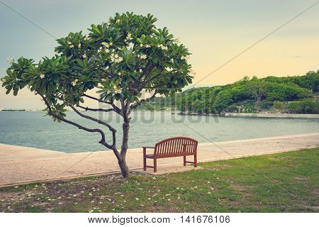 A lonely bench and plumeria tree Lonely scene concept.