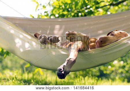 Dig relax in the garden, she love hammock