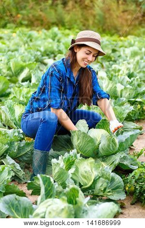 Woman in plant of cabbage. Gardener with cabbage in garden. Harvest. Young farmer harvesting cabbage. Happy young girl with cabbage. Girl shows a crop of cabbage in the garden
