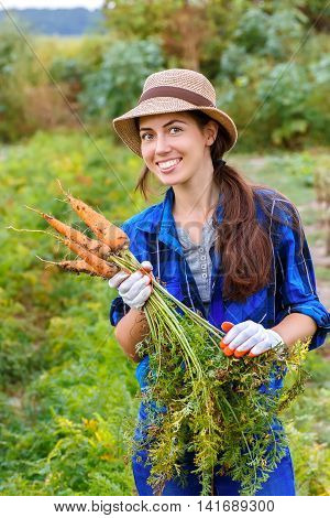 Gardening. Woman with organic carrots in a vegetable garden. Happy girl harvesting carrots in field. Gardener with carrots in garden. Harvest. Young farmer harvesting carrots.