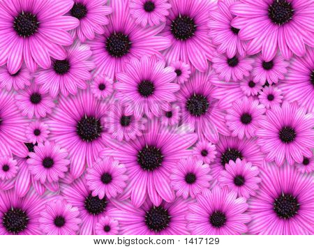 Background Made From Pink Flowers