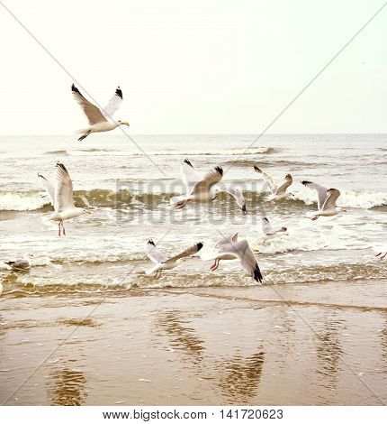 Tranquil sea scene on the beach with flying seagulls. evening scene, nature background.