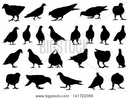 Set of different doves isolated on white