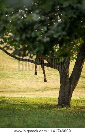 The child sits on a tree. Boy sitting on a tree branch drooping foot down in the park in the summer.