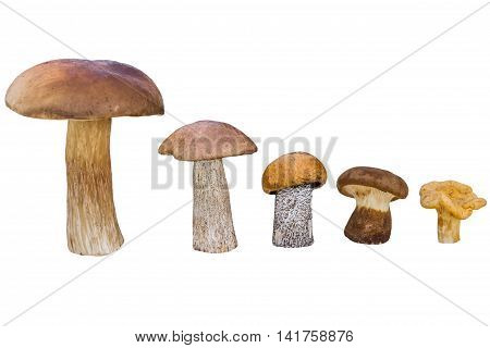 Different mushrooms are in descending order (cep brown cap boletus orange-cap boletus paxil chanterelle)