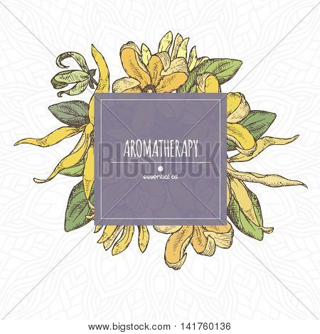 Elegant color center frame template with ylang-ylang sketch. Aromatherapy series. Great for traditional medicine, perfume design, cooking or gardening.