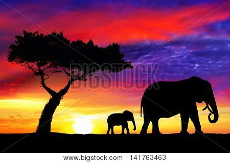 Silhouettes of mother and  baby elephants at sunset in Africa