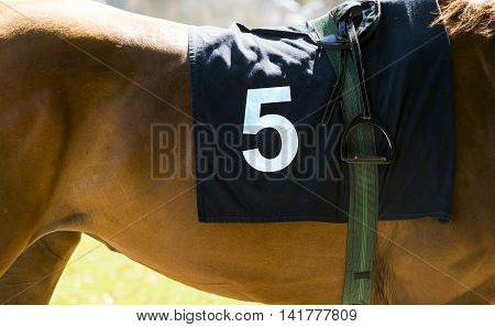 Horse Racing, Close Up On Brown Horse With Number 5