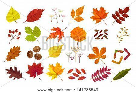 Autumn leaves set, isolated on white background. Cartoon flat style, vector illustration.
