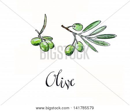 Green olives hand drawn watercolor - Illustration