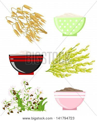 Vector Illustration Of Ripe Ears Of Cereals With Inking. Cereals Icon Set With Rye Rice Wheat Corn O