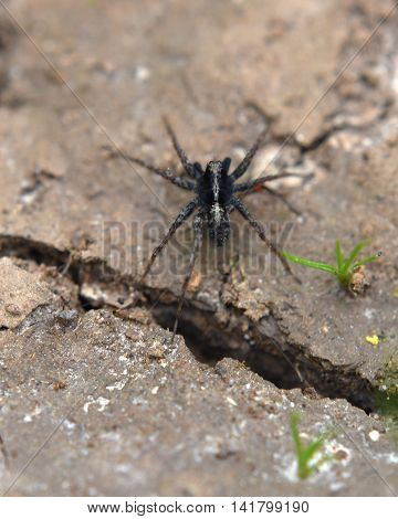 Spider on dry ground in summer time