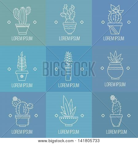 Set of succulent plants and cactuses in pots. Linear logo element design